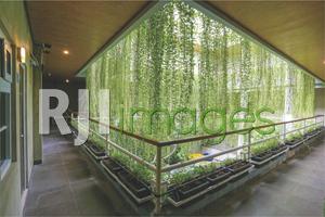 Tanaman rambat hadirkan eksotisme natural koridor kamar